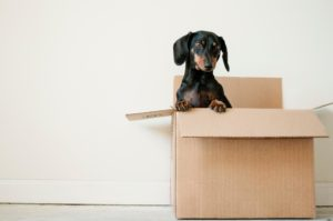 Moving Tips Blog Image